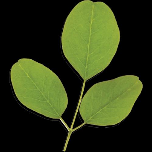 ORGANIC NOT REALLY? What Is Codex Alimentarius?  ~E.G.Plott~