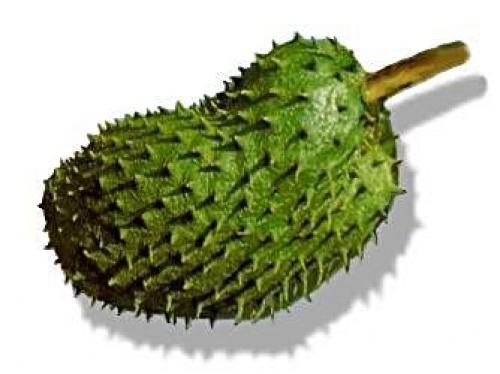 Natural Cure For Cancer Moringa Sop (MoringaSOP ™)  ~E.G.PLOTTPALMTREES.COM