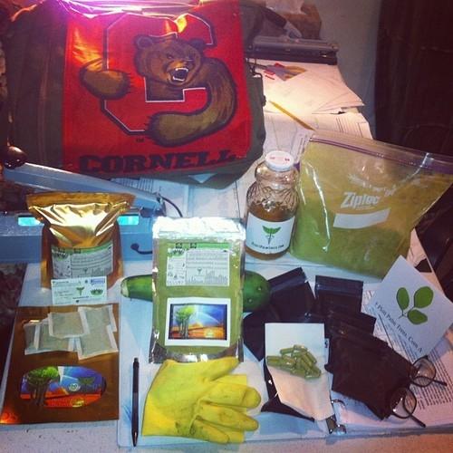 Ⓥ Moringa 1/3 Pound ORGANIC POWDER Ⓥ
