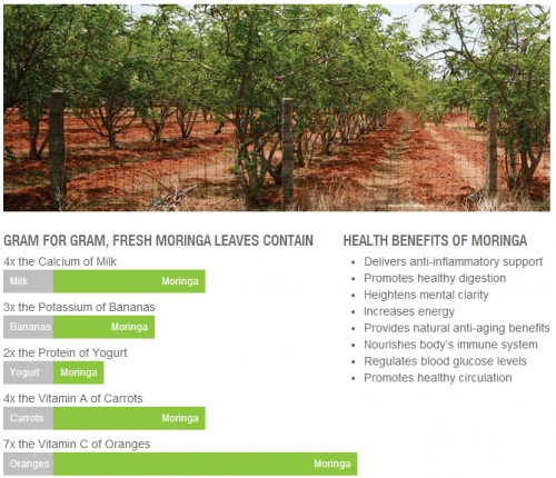 "Moringa Oleifera – Miracle Tree  ""Moringa oleifera is a tree brought from the mind of God to the hands of man"""