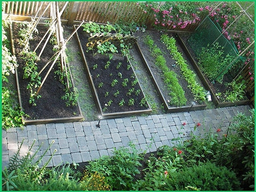 Heirloom Vegetable Garden 25 HEIRLOOM VEGETABLE GARDEN SEEDS NON-GMO/HYBRID ORGANIC SURVIVAL SEED BANK